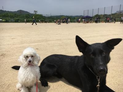 訓練競技会 結果報告♪スーちゃん&ジェット